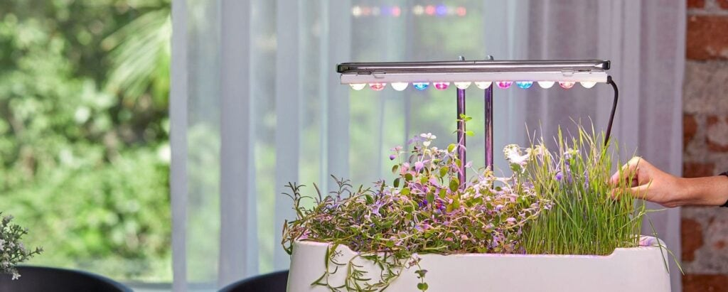 Plan for a Microgreens Business